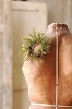 Prickly Pine Candle Ring | Moss