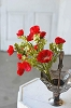 Poppies Please | Red | 20