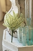 Bursting Astilbe | White | 10.5