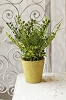 Potted Fern - Green