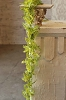 Wood Fern Garland