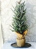 Glittered Pine Tree with Burlap | Large
