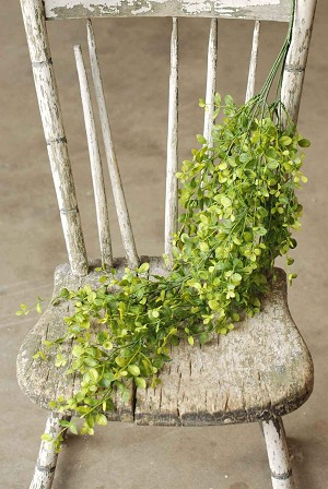 Bog Pimpernel Hanging | Yellow/Green