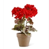 9 Inch Red Geranium in Distressed Clay Pot