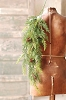 Prickly Pine Hanging | TT Green | 33