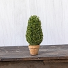 11 IN CEDAR TRIMMED CONE TOPIARY