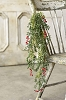 New England Boxwood w/ Berries Hanging | 32
