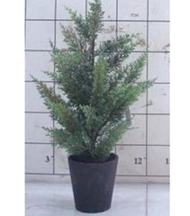 Pine Tree in Pot Medium