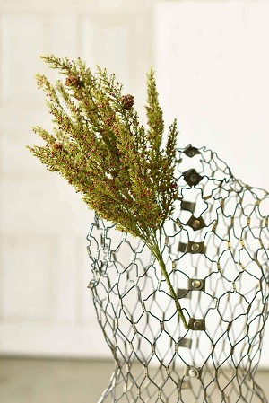 Speckled Berry Pine Bush | 21""